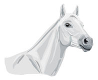 White arabian horse Royalty Free Stock Photography
