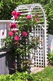 White arbor in a garden. White arbor with red blooming roses in a garden Stock Image