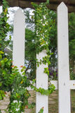 White arbor with green creeper plant  in a garden Royalty Free Stock Photography