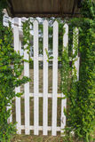 The white arbor with green creeper plant  in a garden Stock Photography