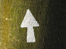 White arrow painted on a tree trunk2 Royalty Free Stock Images