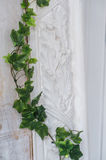 White art stucco gypsum wall with a grean loach branch on it Stock Photos