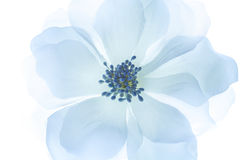 White artificial flower isolated Royalty Free Stock Photo