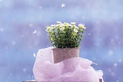 White artificial flowers arranged in  mini cardboard pot Royalty Free Stock Photography