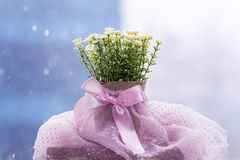 White artificial flowers arranged in  mini cardboard pot Stock Image