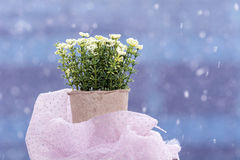 White artificial flowers arranged in  mini cardboard pot Royalty Free Stock Photo