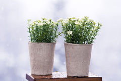 White artificial flowers arranged in  mini cardboard pots Royalty Free Stock Photos