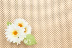 White artificial flowers on the table cloth Royalty Free Stock Image