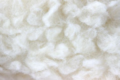White hairy fur texture detail Stock Photography