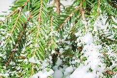 White artificial  snow Christmas tree Royalty Free Stock Photos