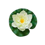 White artificial water lily on white background Royalty Free Stock Photos