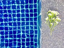 White aster flowers bouquet put on stone floor near swimming pool royalty free stock image
