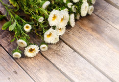 White aster flowers Royalty Free Stock Photos