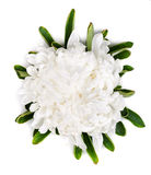 White aster isolated on white Royalty Free Stock Photography