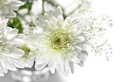 White asters. Fragment of a bouquet of white asters with free space on the right Royalty Free Stock Image