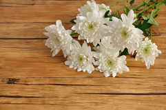 White asters Stock Image