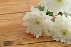 White asters Stock Photos