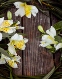 White astromeria on wooden background Stock Photography