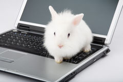 White baby bunny on the laptop Stock Images