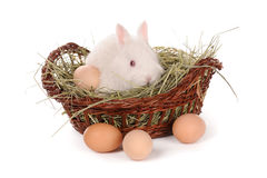 White baby rabbit and eggs in a basket Royalty Free Stock Photo