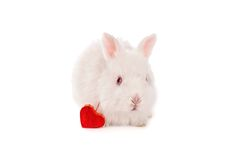 White baby rabbit and heart Stock Photos