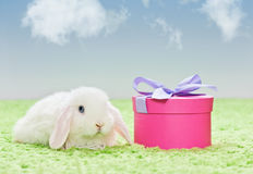 White baby rabbit with present Royalty Free Stock Photos