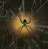 White-backed Garden Spider Royalty Free Stock Photography