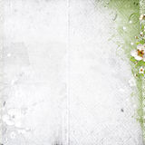 White background with apple tree flowers Royalty Free Stock Image