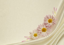 White background with asters Royalty Free Stock Images