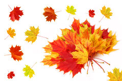White background with autumn leaves Stock Photos