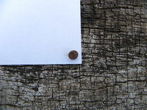 White background beat year old tree whose bark Stock Image