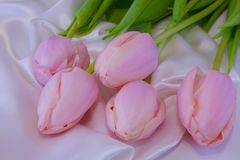 Top view of the five beautiful, spring, pink tulips. Spring flowers lie on a white silk fabric. stock images