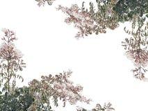 White Background with Campanula Latifolia Flowers Borders