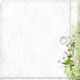 White background with cherry tree flowers Stock Photography