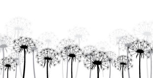 White background with dandelions. Royalty Free Stock Image