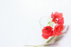 White background with empty place for inscription with red poppi Stock Photos