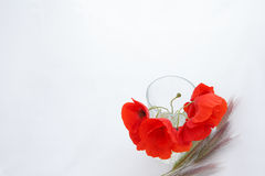 White background with empty place for inscription with red poppi Royalty Free Stock Photography