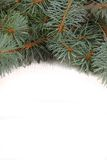 White background with fir branches Royalty Free Stock Photos