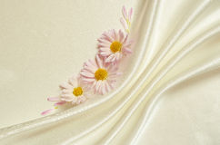 White background with folds and asters Royalty Free Stock Images