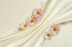 White background with folds and daisies Royalty Free Stock Photos