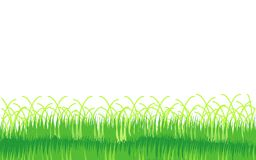 White background with a grass. Vector illustration. The grass isolated on a white background Vector Illustration