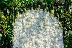 White background green leaves border. Fresh flowers design border with green leaves white flowers background Royalty Free Stock Photography