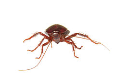 White Background Homemade Insect Cockroach Stock Photos