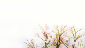 White background and a little pink flowers on the corner. There are blank space for fill the text Royalty Free Stock Images