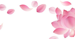 White background with pink petal. White panoramic background with pink petal of lotus and flower Stock Photography