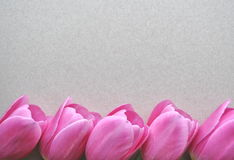 White background with pink tulip flower on the border with space for copy and text. White background with pink tulip flower on the border with space for copy stock photo