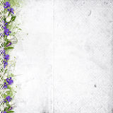 White background with purple spring flowers Royalty Free Stock Photo