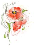 White Background with Red Poppy Flowers Stock Image