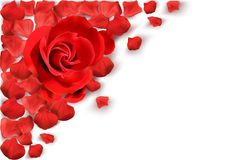 Background with Red Rose and Petal Decoration. White Background with Red Rose and Petal Decoration - Festive Illustration, Vector royalty free illustration