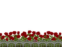 White background with rosegarden Stock Image